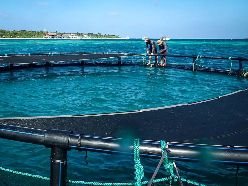 Turtle lagoon enclosure Marine Savers Maldives