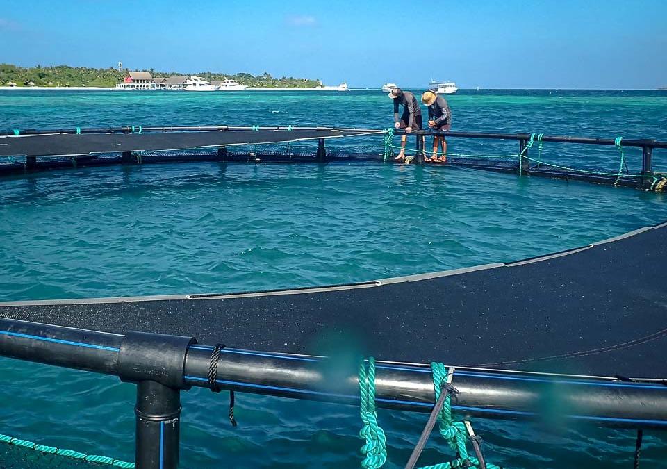 Turtle Ocean Enclosure