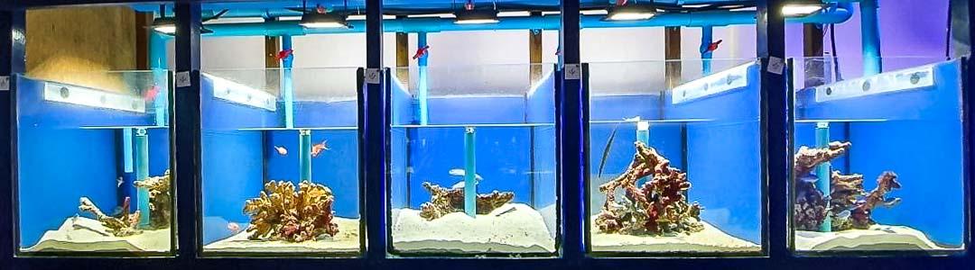 Fish Lab breeding tanks