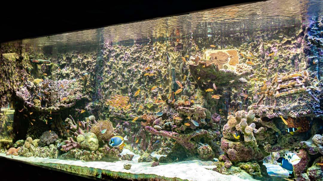 Marine aquarium Maldives