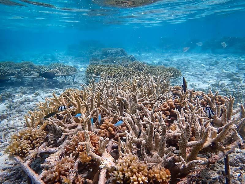 Reefscapers artificial reefs Maldives water villas