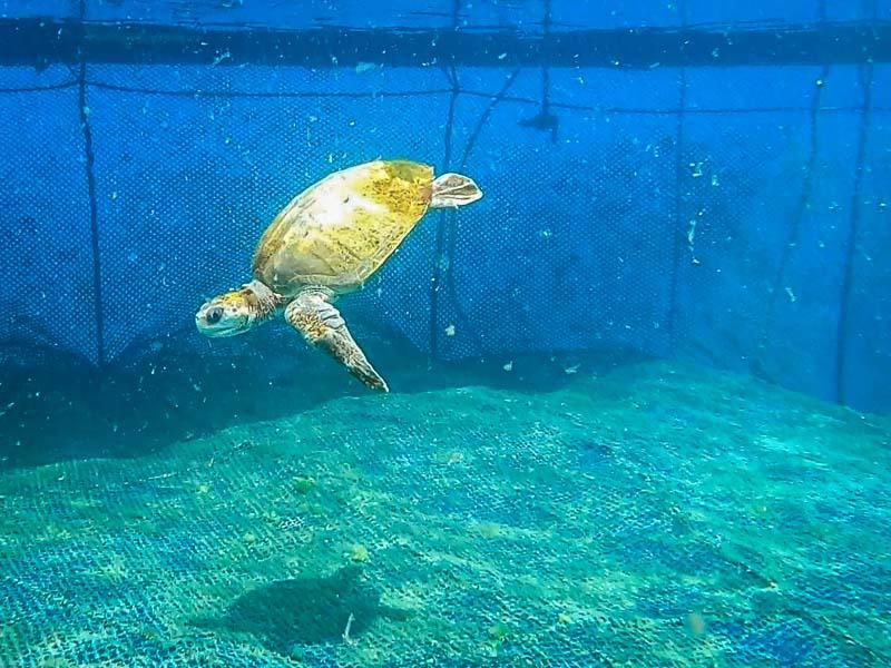 Turtle in our ocean enclosure