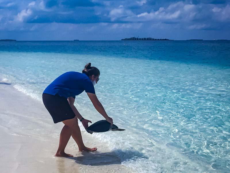 Amie stranded sea turtle release Maldives