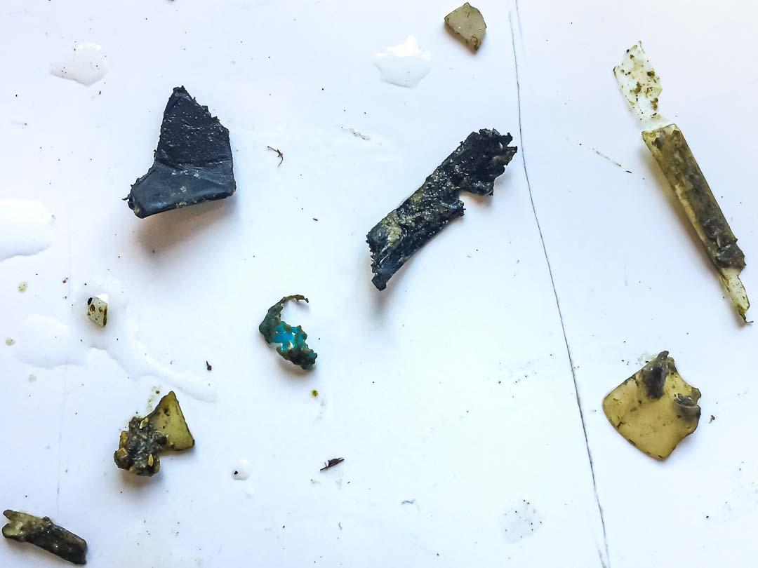 Plastic pollution ingested by sea turtle Maldives (Amie)