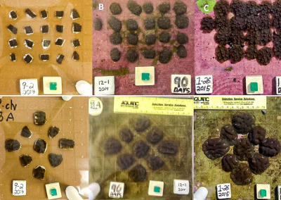 Reefscapers micro-fragmenting corals trial Maldives