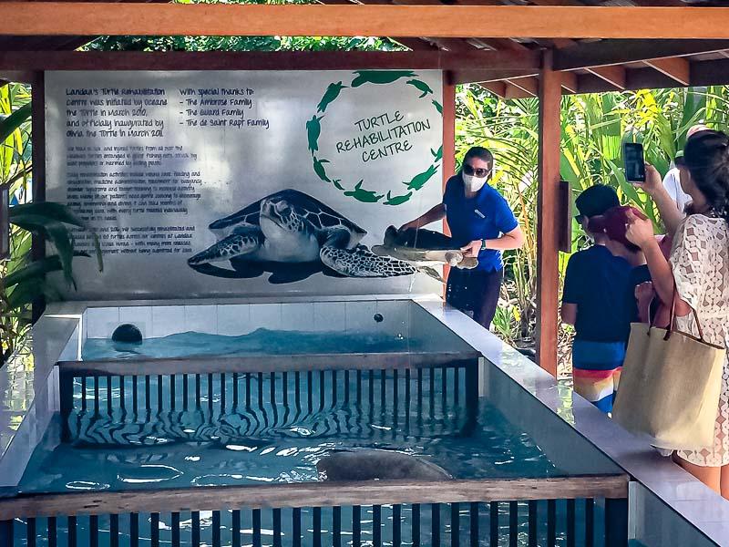 CANCRI sea turtle rehabilitation release Maldives