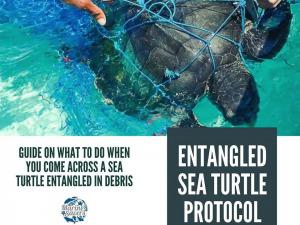 Turtle rescue protocols Marine Savers