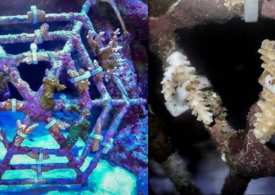 Aquarium 1 miniframe
