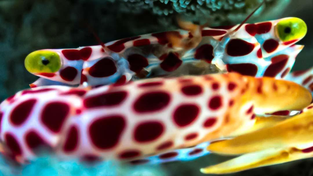 Aquarium jellyfish Marine Savers Maldives