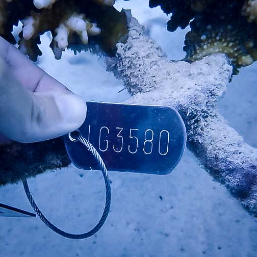 Reefscapers new tag numbering