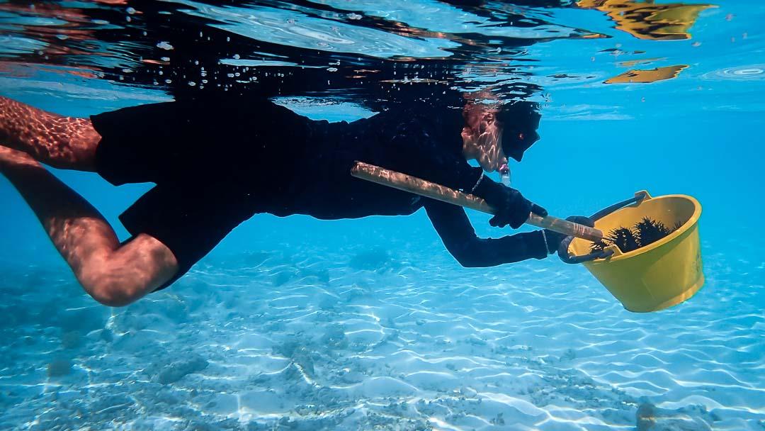 Ale coral biologist blog Maldives crown of thorns