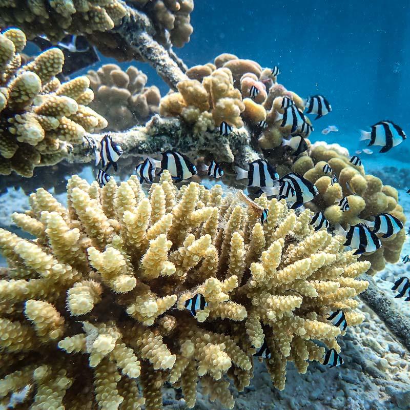 Ale coral biologist blog Maldives - fish