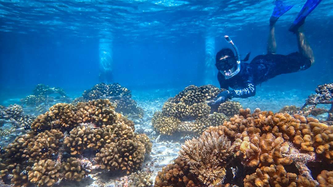 Ale coral biologist blog Maldives