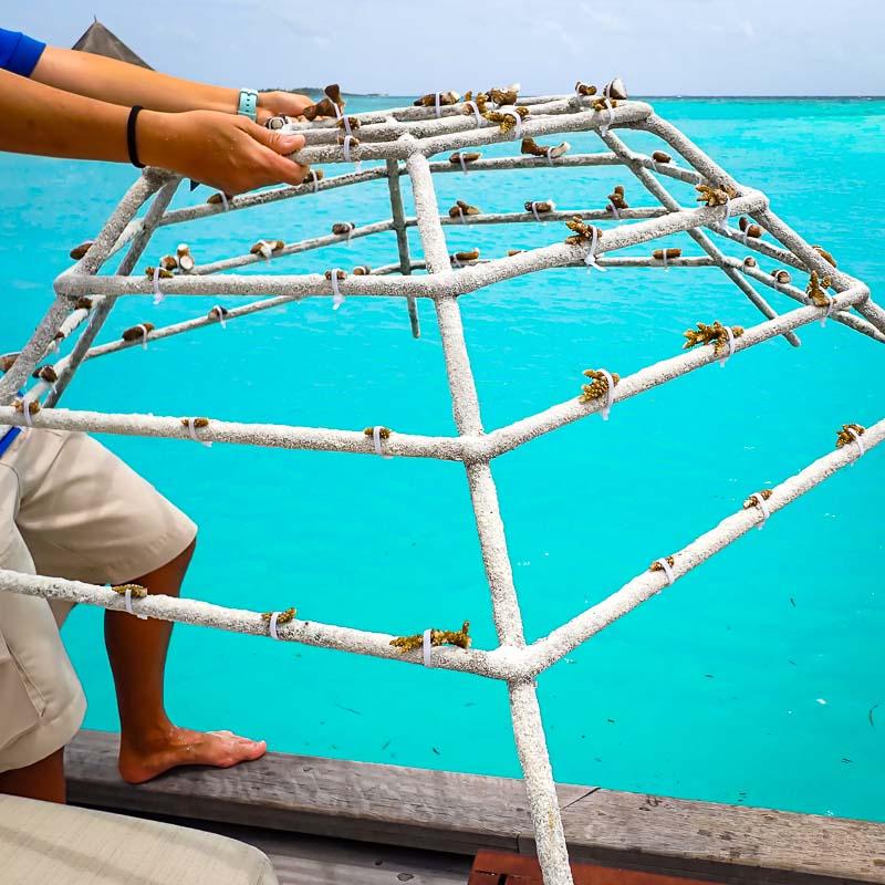 Ale coral biologist blog Maldives - coral frame