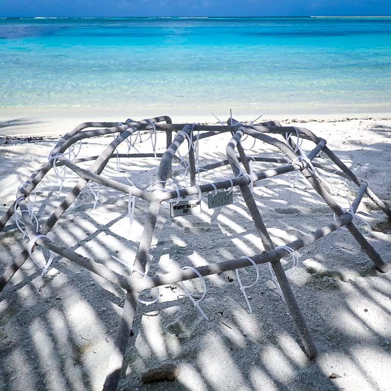 Ale coral biologist blog Maldives heart frame