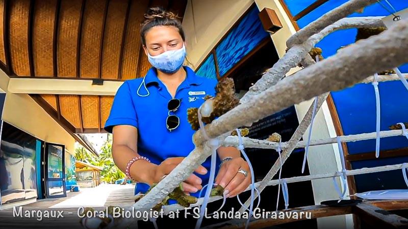 Margaux Reefscapers coral biologist Maldives - FS Landaa