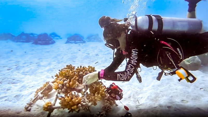 Margaux Reefscapers coral biologist Maldives - frames