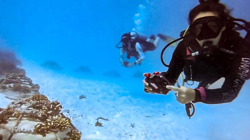 Margaux Reefscapers coral biologist Maldives - photos