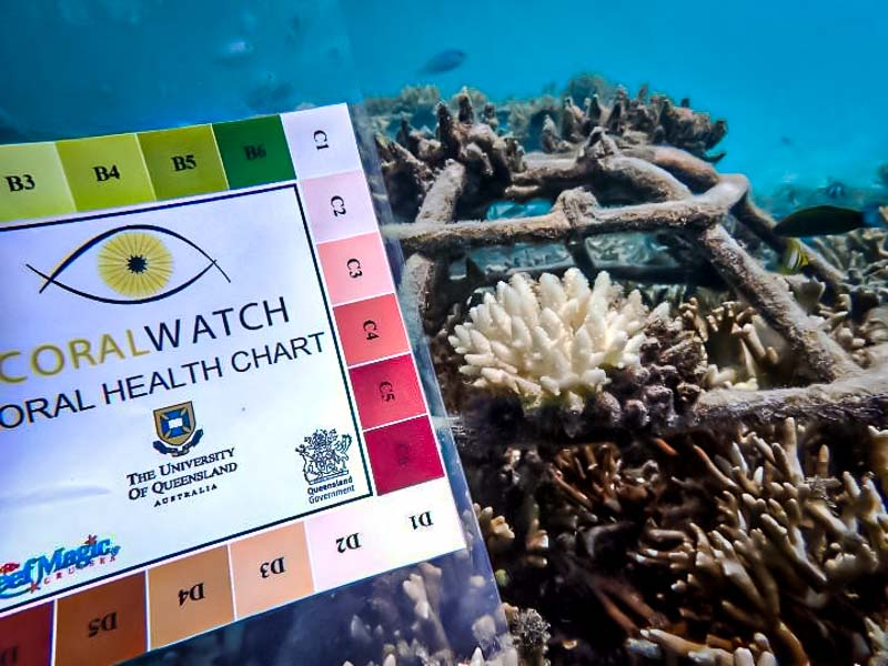 Reefscapers coralwatch Maldives