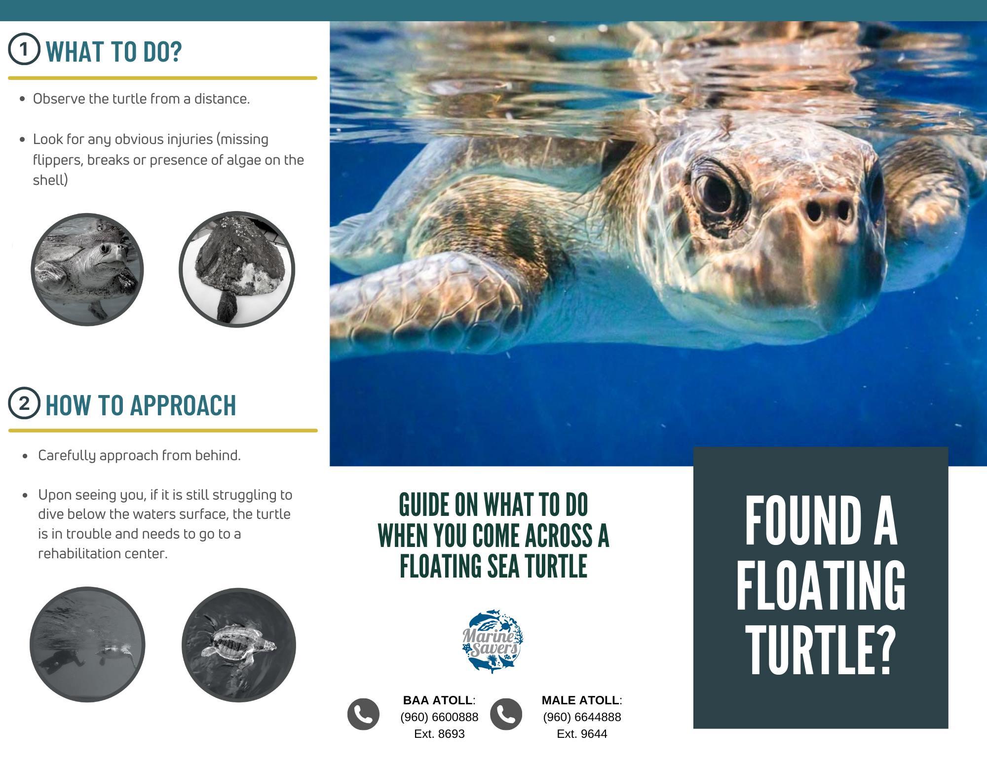 Sea turtle rescue protocol ghost net entanglement Maldives