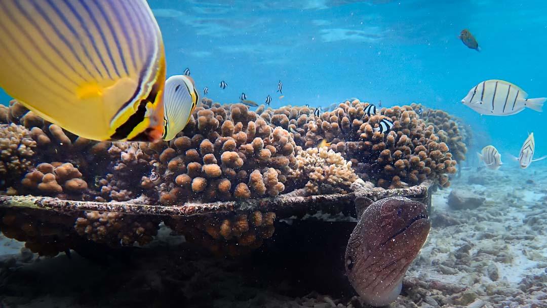 Alejandra coral biologist Maldives