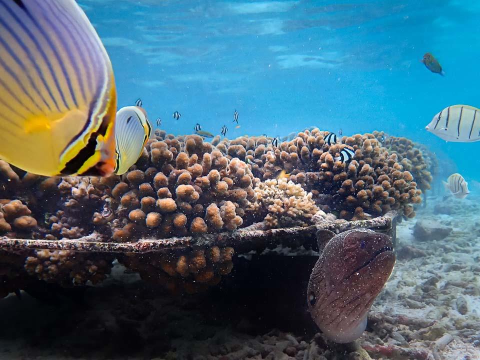 Coral Propagation with Alejandra