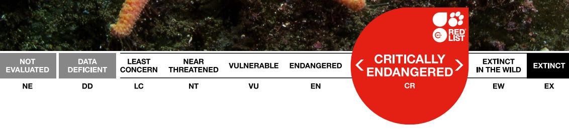 IUCN red list workshop Maldives