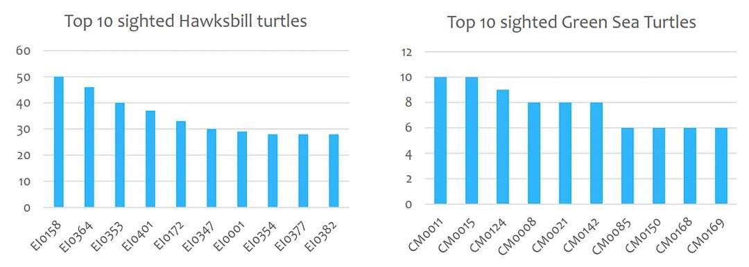 Marine Savers Maldives sea turtle identification project top-10