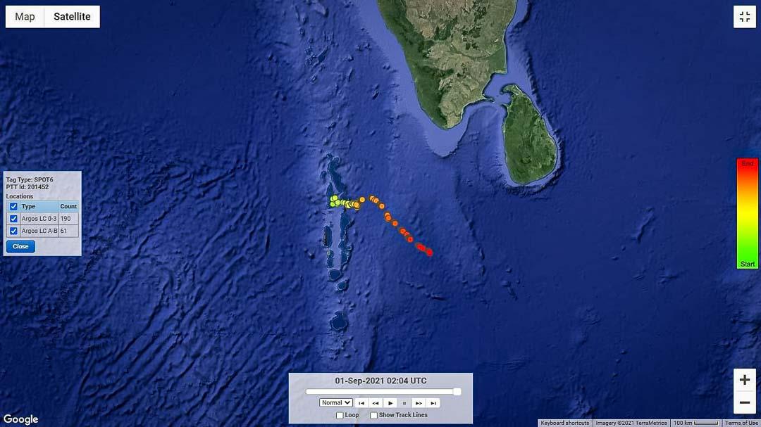 Marine Savers Maldives sea turtle satellite tracker