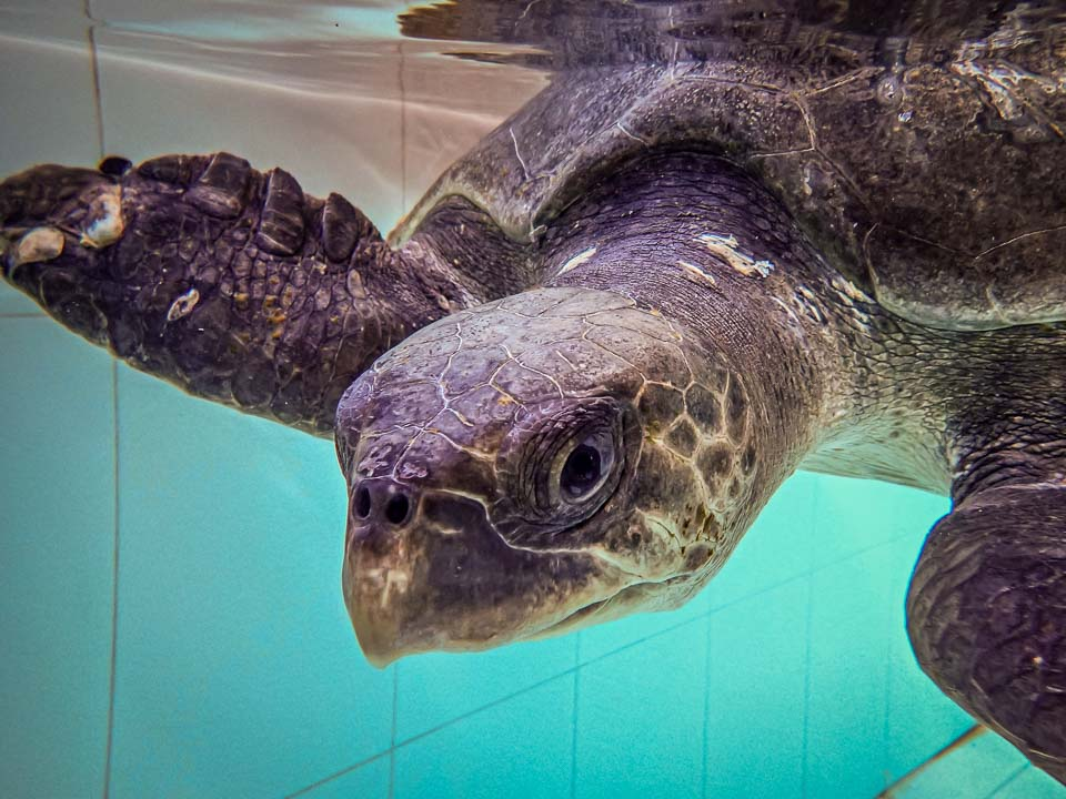 Turtle Tracker 📍 Endangered Species